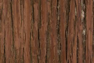 杉皮の壁材の写真素材 [FYI01680911]