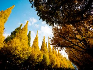神宮外苑のイチョウ並木の写真素材 [FYI01681287]
