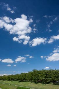 荒川赤羽桜堤緑地の写真素材 [FYI01681614]