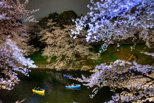 千鳥ヶ淵の桜 ライトアップの写真素材 [FYI01681640]