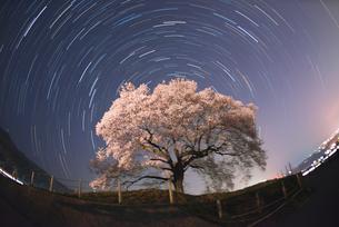 わに塚の夜桜と星の軌跡の写真素材 [FYI01681641]