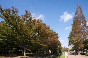仙台堀川公園の写真素材 [FYI01681748]