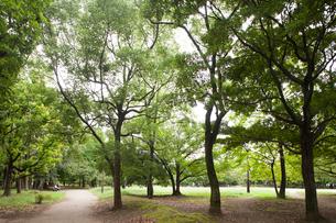 清澄公園の写真素材 [FYI01681924]