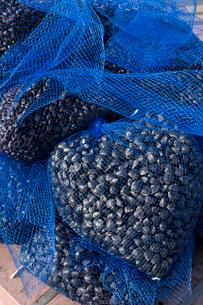 漁港に水揚げされたシジミの写真素材 [FYI01682125]