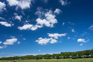 荒川赤羽桜堤緑地の写真素材 [FYI01682310]
