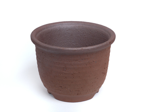 エビネ鉢の写真素材 [FYI01682521]