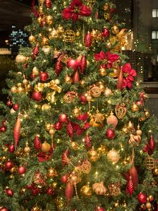 クリスマスツリーの写真素材 [FYI01682805]