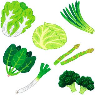 野菜/葉茎菜類のイラスト素材 [FYI01682841]