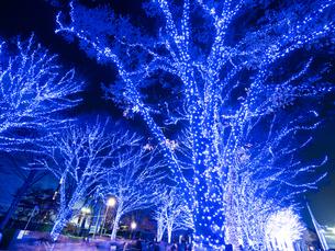 代々木公園のイルミネーション 青の洞窟SHIBUYAの写真素材 [FYI01683264]