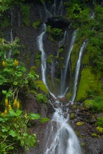 吐竜の滝緑の流れの写真素材 [FYI01683455]
