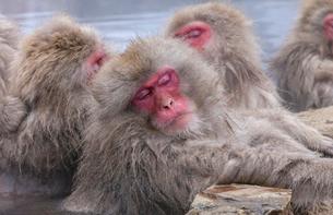 地獄谷野猿公苑の猿の写真素材 [FYI01683598]