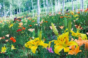 富士見高原の花の里の写真素材 [FYI01683661]