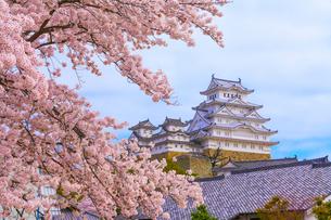 姫路城と桜の写真素材 [FYI01683668]