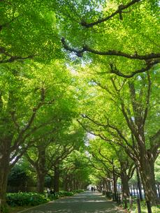 新緑の神宮外苑の写真素材 [FYI01683694]