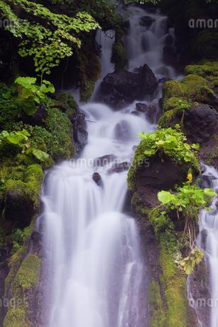 吐竜の滝の緑と流れの写真素材 [FYI01683775]