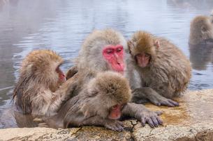 地獄谷野猿公苑の猿の写真素材 [FYI01683892]