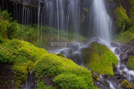吐竜の滝苔と流れの写真素材 [FYI01683903]