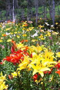 富士見高原の花の里の写真素材 [FYI01683942]