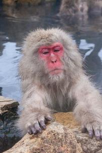 地獄谷野猿公苑の猿の写真素材 [FYI01683946]