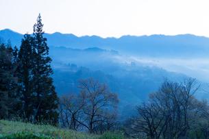 明け方の小川村の山林の写真素材 [FYI01684085]