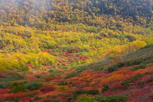 乗鞍岳位ヶ原の紅葉とナナカマドの写真素材 [FYI01684233]
