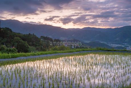 姨捨の棚田と夕暮れの山並みの写真素材 [FYI01684237]