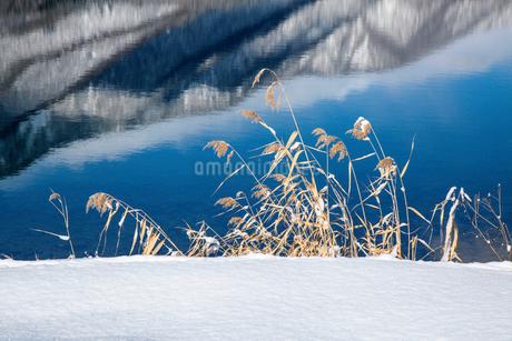 青木湖の水面の映り込みと雪景色の写真素材 [FYI01684293]