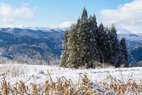 小川村の畑と北アルプスの雪景色の写真素材 [FYI01684320]