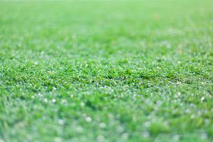 サッカー練習場の芝生の写真素材 [FYI01684340]
