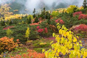 乗鞍岳位ヶ原の紅葉の写真素材 [FYI01684360]