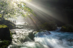 円原川伏流水の光芒と流れの写真素材 [FYI01684368]