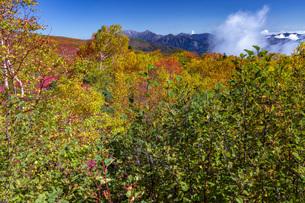 乗鞍岳、位ヶ原の紅葉と山並みの写真素材 [FYI01684393]