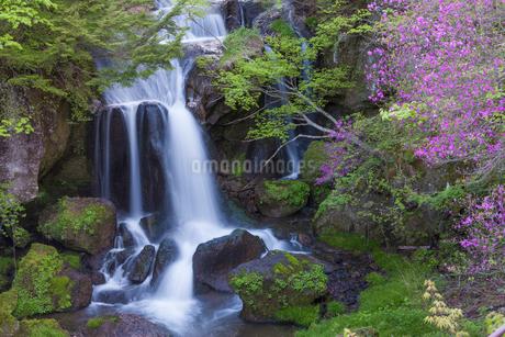 竜頭ノ滝とミツバツツジの写真素材 [FYI01684401]