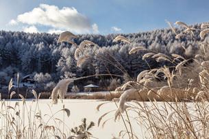 冬の聖高原と青空の写真素材 [FYI01684442]