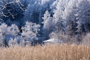 冬の聖高原の写真素材 [FYI01684443]