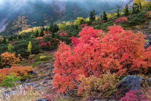 乗鞍岳位ヶ原の紅葉とナナカマドの写真素材 [FYI01684479]