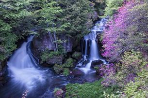 竜頭ノ滝とミツバツツジの写真素材 [FYI01684604]