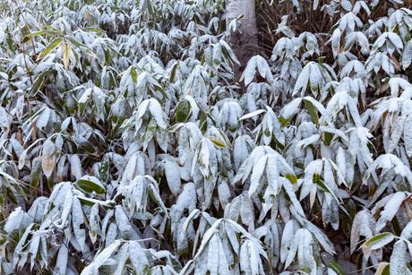 冬の志賀高原,木戸池の雪景色の写真素材 [FYI01684612]