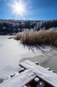 冬の聖高原の霧氷の樹木と青空の写真素材 [FYI01684615]