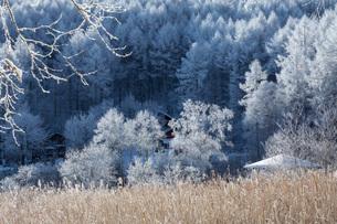 冬の聖高原の写真素材 [FYI01684648]