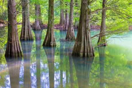 新緑の篠栗九大の森の写真素材 [FYI01684656]