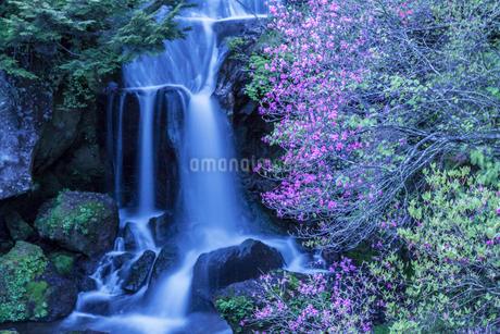 竜頭ノ滝とミツバツツジの写真素材 [FYI01684672]