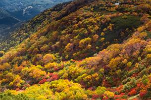 乗鞍岳位ヶ原の紅葉の写真素材 [FYI01684673]