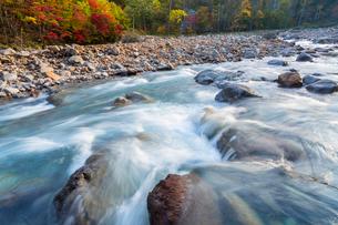 秋の八幡平松川渓谷の紅葉の写真素材 [FYI01684768]