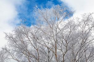 冬の志賀高原の雪景色の写真素材 [FYI01684799]