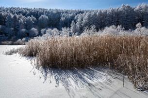 冬の聖高原の霧氷の樹木と青空の写真素材 [FYI01684864]