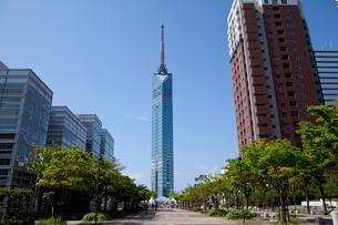 福岡タワーの写真素材 [FYI01684932]