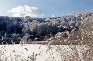 冬の聖高原と青空の写真素材 [FYI01684937]
