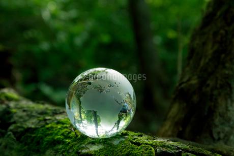 森と透明な地球儀の写真素材 [FYI01685407]