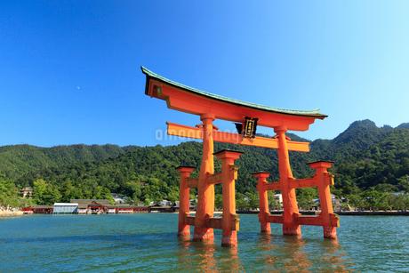 厳島神社と大鳥居の写真素材 [FYI01685589]